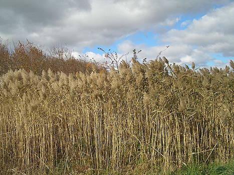 Valerie Bruno - Autumn Beach Reeds