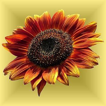 MTBobbins Photography - Autumn Beauty Yellow