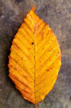Chris Bordeleau - Autumn Beech Leaf on Stone Two
