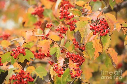 Danielle Groenen - Autumn Berries
