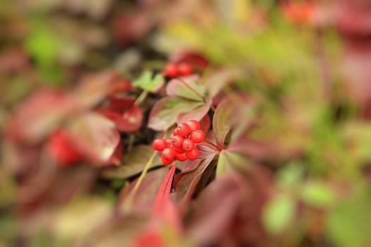 Marv Russell - Autumn Berries
