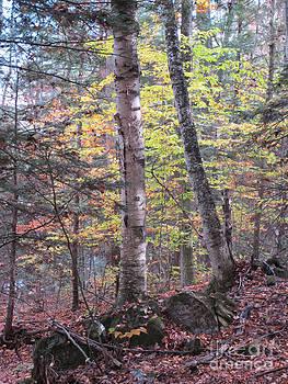 Autumn Birch by Linda Marcille