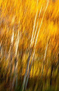 Steve Harrington - Autumn Birches