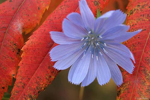 Autumn Blush by Greg Taylor