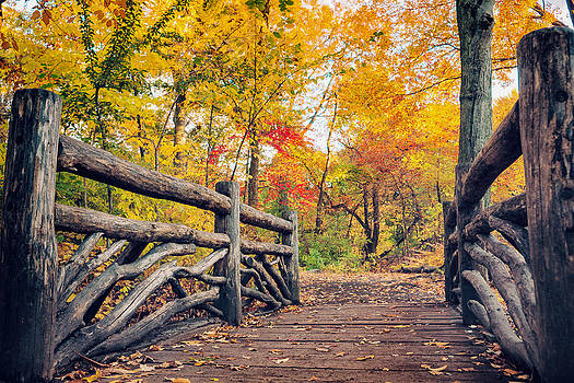 Autumn Bridge - Central Park - New York City by Vivienne Gucwa