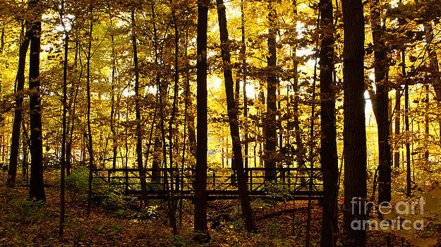 Valerie Fuqua - Autumn Bridge I