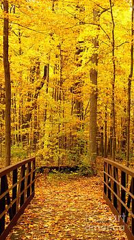 Valerie Fuqua - Autumn Bridge V