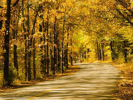 Autumn canopy  by Kim Loftis