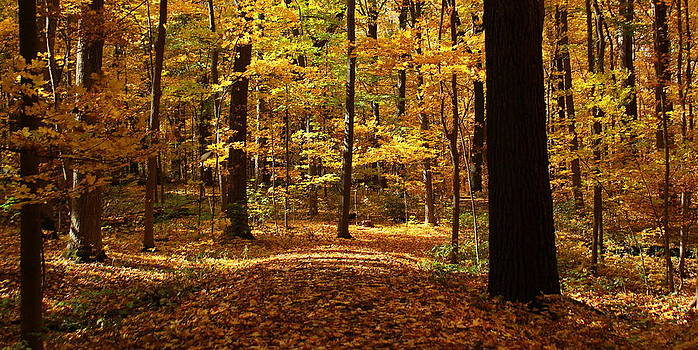 Rosanne Jordan - Autumn Carpet of Warmth