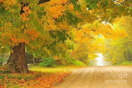 Terri Gostola - Autumn Cascade