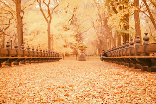 Autumn - Central Park Elm Trees - New York City by Vivienne Gucwa