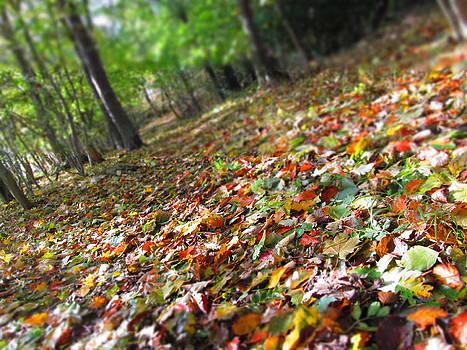 Autumn by Chepcher Jones