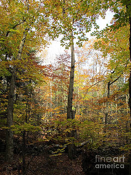 Autumn Clearing by Linda Marcille