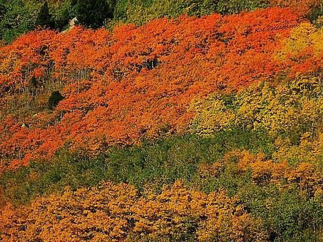 Kae Cheatham - Autumn Color at the Continental Divide 2