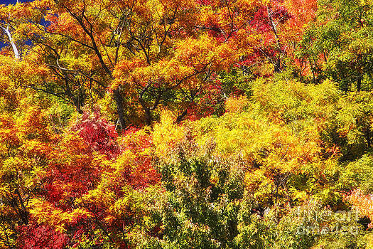 Jill Lang - Autumn Color