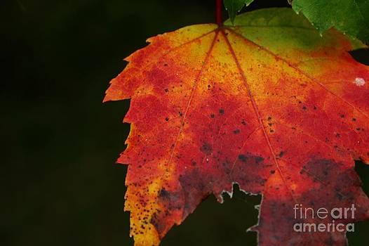 Autumn Color by Laura Paine