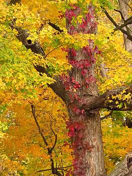 Autumn Color Splash by Lori Frisch