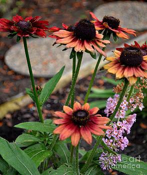 Autumn Colored Blackeye Susan's by Eva Thomas