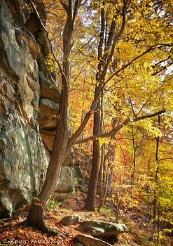 Autumn Colors 1 of 5 by Robert Partridge