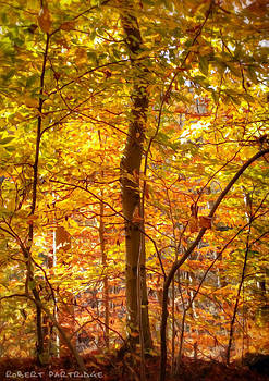 Autumn Colors 2 of 5 by Robert Partridge