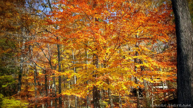 Autumn Colors 4 of 5 by Robert Partridge