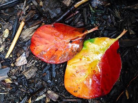 Autumn Colors by Felix Zapata
