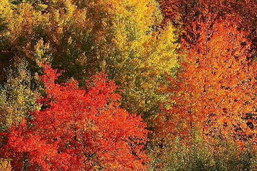 Autumn Colors by George Cislariu