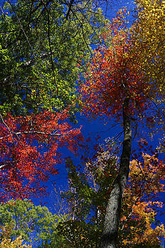 Autumn Colors by Julie VanDore