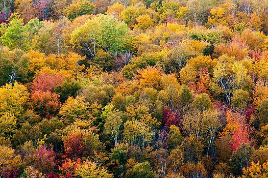 Matt Dobson - Autumn Colors