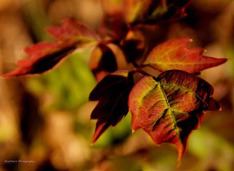 Autumn colors by Vanessa Parent