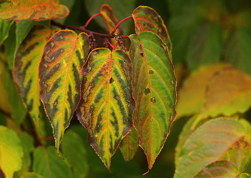 Autumn colours by Jacqui Collett