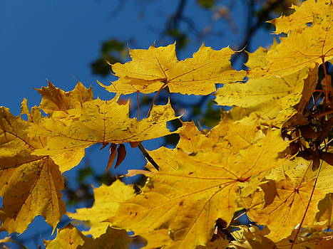 Autumn colours by Janina  Suuronen