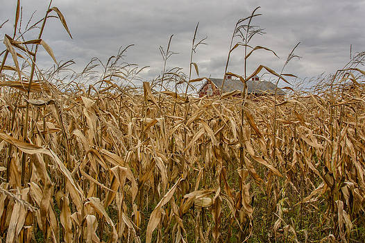Autumn Corn Field and Barn by At Lands End Photography
