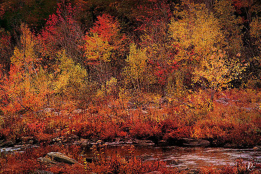 Autumn Creek by David Lee