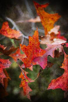 Autumn Dance by Kim Zier