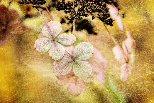 Autumn Dance by Margaret Hormann Bfa