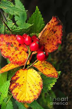 Autumn by Daniela White