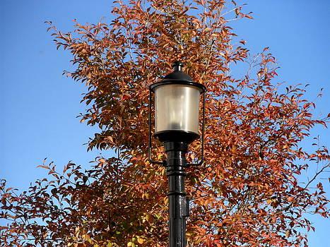 Kate Gallagher - Autumn Days