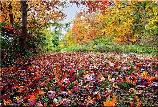 Autumn Decor by Mikki Cucuzzo