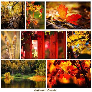 Autumn details  by Svetoslav Sokolov