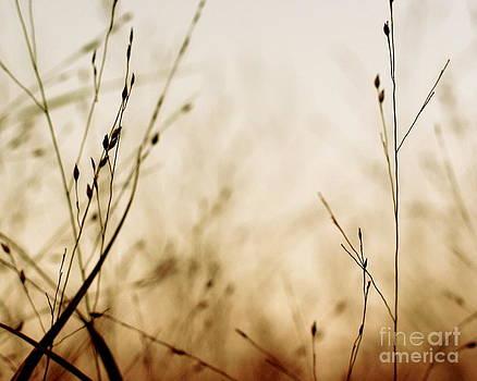Autumn Dream by Kimberly Nickoson