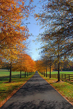 Autumn Drive by Perry Harmon