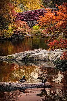 Chris Lord - Autumn Duck Couple