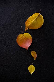 Autumn by Eleanor Caputo