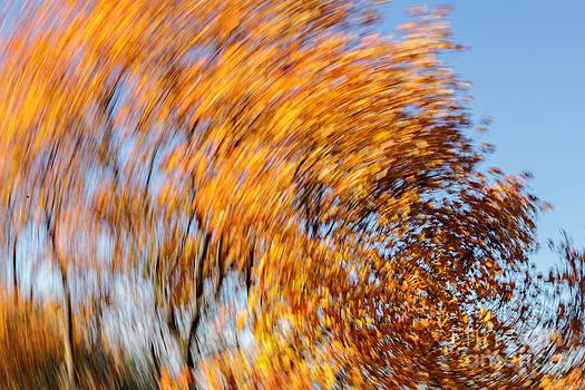 Autumn by Eugenio Moya