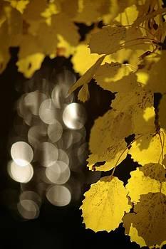 Autumn evening rays by Tiina M Niskanen