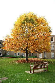 Autumn Fall by R J