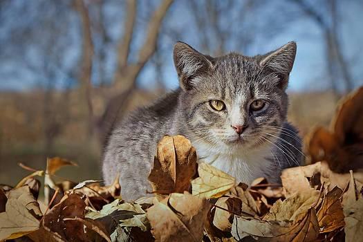 Nikolyn McDonald - Autumn Farm Cat 1