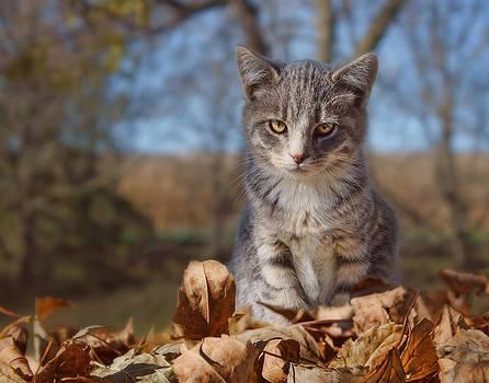 Nikolyn McDonald - Autumn Farm Cat #2 - Horizontal