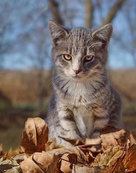 Nikolyn McDonald - Autumn Farm Cat - 2